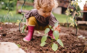 Toddler in garden with seedlings